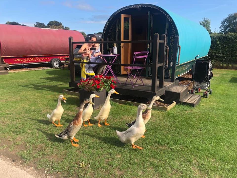 glamping at south lycthett manor in dorset